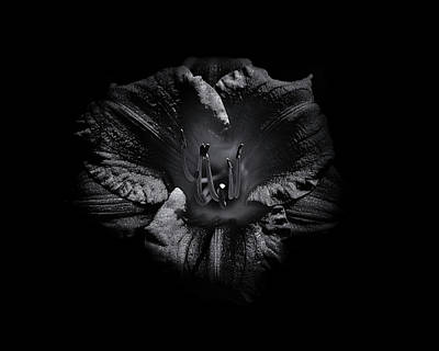 Poster featuring the photograph Backyard Flowers In Black And White 26 by Brian Carson