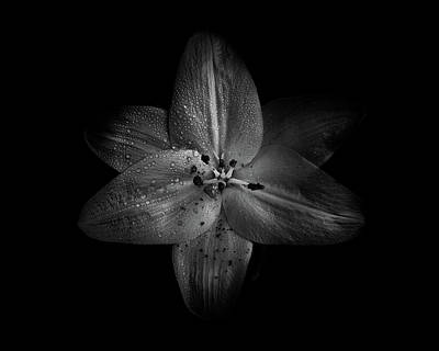 Poster featuring the photograph Backyard Flowers In Black And White 28 by Brian Carson