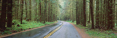 Bad Weather Road, Hoh Rain Forest Poster by Panoramic Images