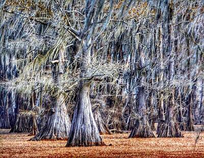 Bald Cypress In Caddo Lake Poster by Sumoflam Photography