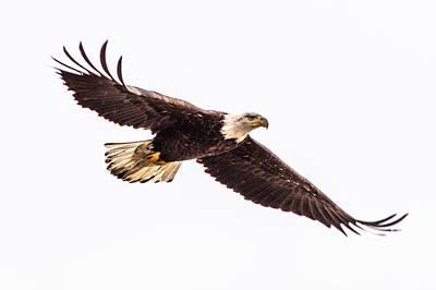 Bald Eagle 2 Poster
