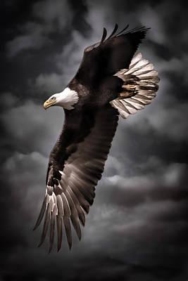 Bald Eagle At Dusk Poster