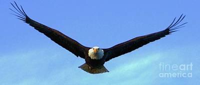 Bald Eagle Victory Poster