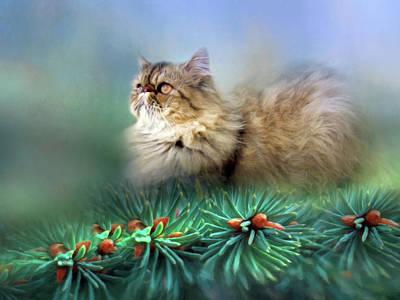 Ball Of Fluff Cat Art Poster by Georgiana Romanovna