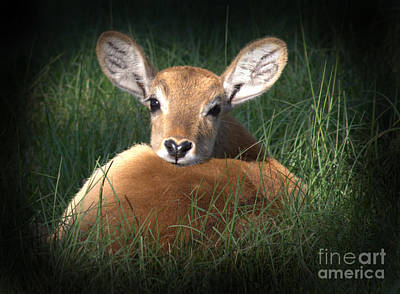 Bambi Poster by Kim Henderson