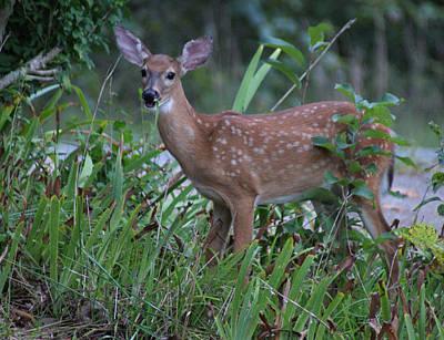 Bambi Poster by Rick Friedle