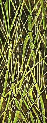 Bambo Garden Poster