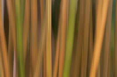 Bamboo Abstract Poster by Carolyn Dalessandro