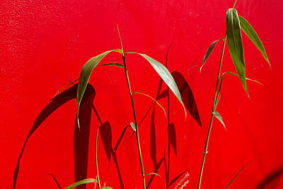 Bamboo Against Red Wall Poster