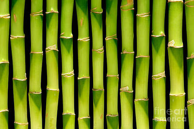 Bamboo Bamboo Bamboo Poster by Olivier Le Queinec