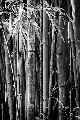 Bamboo Black And White Poster by Kelley King