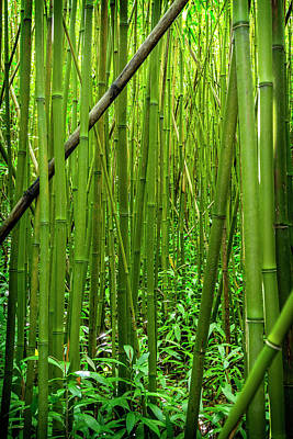 Bamboo Forest Poster by Kelley King