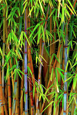 Poster featuring the photograph Bamboo by Harry Spitz