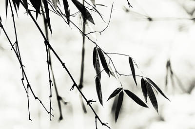 Bamboo Leaves 1. Black And White Poster by Jenny Rainbow