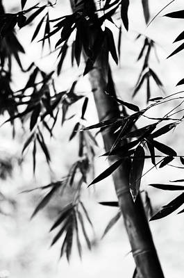 Bamboo Leaves. Black And White Poster by Jenny Rainbow