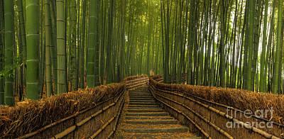 Bamboo Panorama - Kyoto Japan Poster by Wietse Michiels