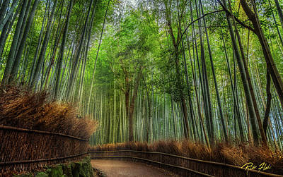 Poster featuring the photograph Bamboo Path by Rikk Flohr