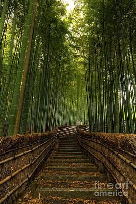 Bamboo Steps Poster by Wietse Michiels
