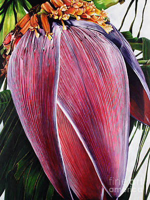 Banana Blossom Poster by Sandra Blazel - Printscapes
