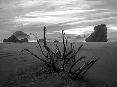 Bandon Beach Tree Poster