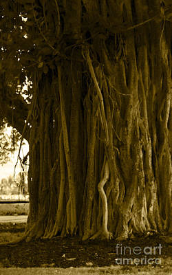 Banyan Surfer - Triptych  Part 1 Of 3 Poster by Sean Davey