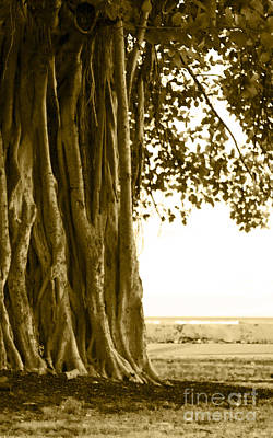 Banyan Surfer - Triptych  Part 2 Of 3 Poster by Sean Davey