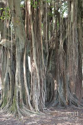 Banyan Tree Poster by Carol Groenen