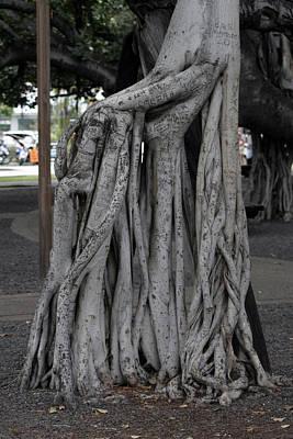 Banyan Tree, Maui Poster