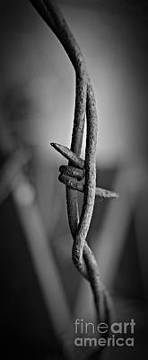 Barbed Wire 3 Bw Poster