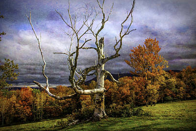 Bare Autumn Tree Poster by Garry Gay