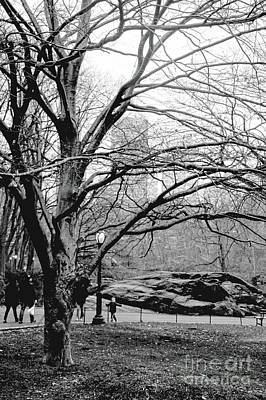 Bare Tree On Walking Path Bw Poster by Sandy Moulder