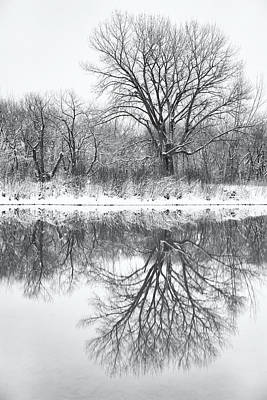 Poster featuring the photograph Bare Trees by Darren White