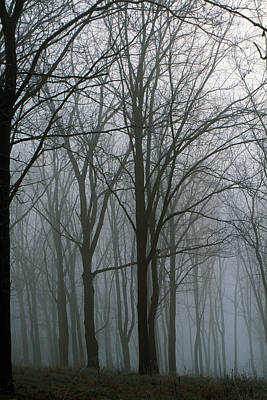Bare Trees In Misty Forest, Finger Poster