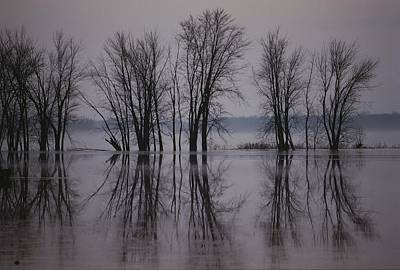 Bare Trees Reflected In The Water Poster by Sam Abell