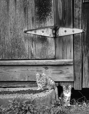 Poster featuring the photograph Barn Cats by Pete Hellmann