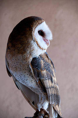 Poster featuring the photograph Barn Owl by Monte Stevens