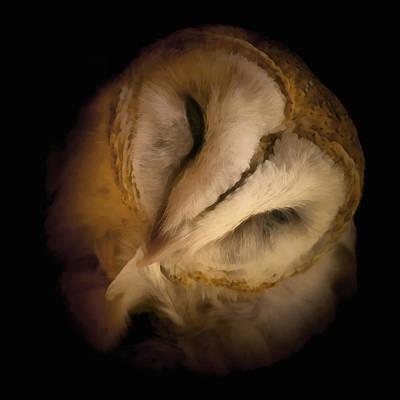 Barn Owl Preening Poster by Ernie Echols