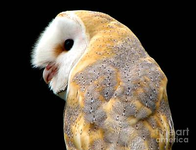 Poster featuring the photograph Barn Owl by Rose Santuci-Sofranko