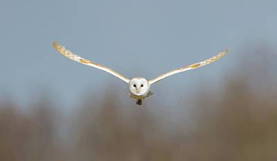 Barn Owl Sculthorpe Moor Poster