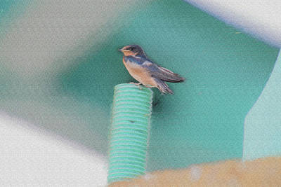 Barn Swallow Posing On Perch....paintography Poster by Dan Friend