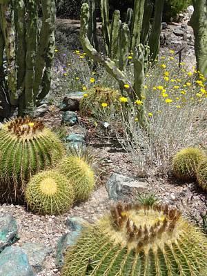 Barrels And Barrels Of Cactus Poster
