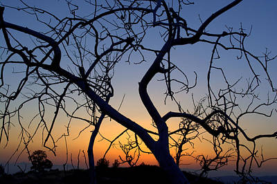 Poster featuring the photograph Barren Tree At Sunset by Lori Seaman