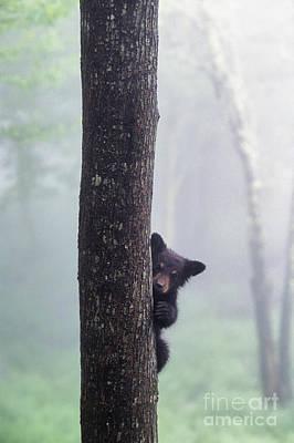 Bashful Bear Cub - Fs000230 Poster