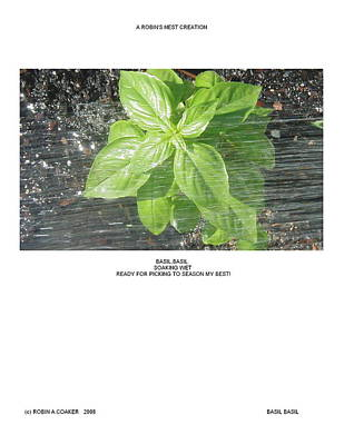 Poster featuring the photograph Basil Basil by Robin Coaker