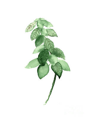 Basil Watercolor Art Print Painting Poster