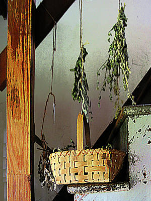 Basket And Drying Herbs Poster by Susan Savad