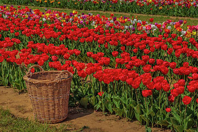 Poster featuring the photograph Basket For Tulips by Susan Candelario
