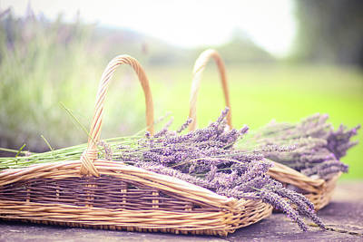 Baskets Of Lavender Poster by Sasha Bell
