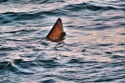Basking Shark In July Poster
