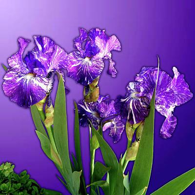 Batik Irises Poster